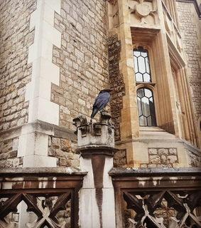 animal, tower of london and expensive life