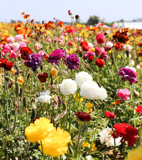 flowers, flower field and spring