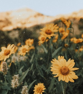vintage, yellow and nature