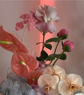 flower, orchid and beauty