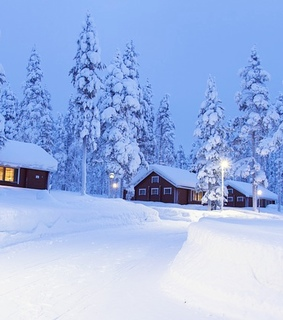 trees, houses and cold