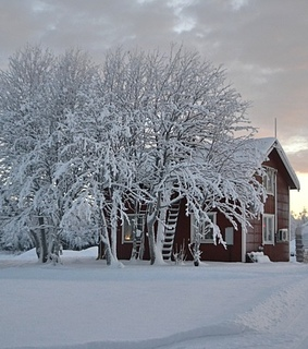 snow, house and trees