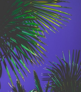 palm trees, ferns and palm