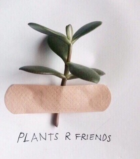 leaves, plant and plants are friends