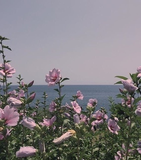 periwinkle, aesthetic and sea