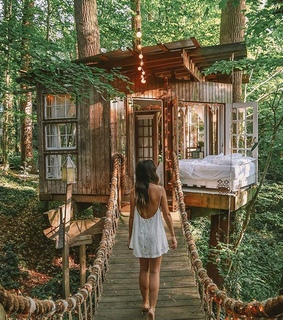 tree house, earthfocus and forest