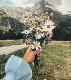 travel, dandelions and girly