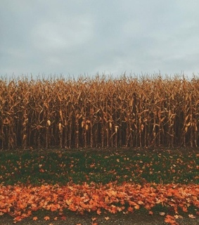 fall, autumn and october