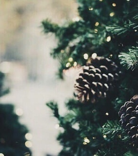 lights, cones and fir trees