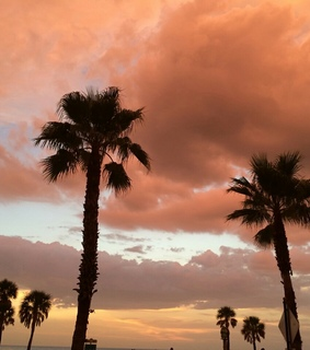 travel, orange sky and palm trees