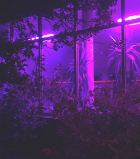 purple theme, aesthetic and theme