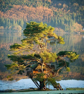 scotland, lodge and forest