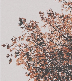 leaves falling, fall and tree