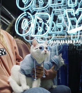 obey, sweatshirts and cats