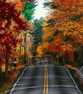 road, fall and beauty