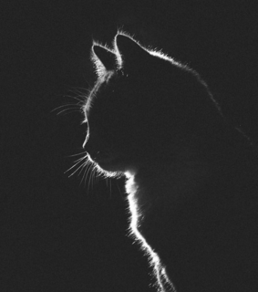 black cat, cat silhouette and wallpapers