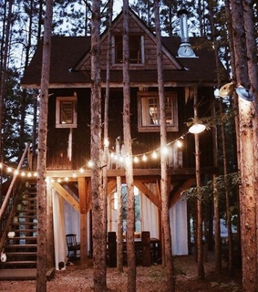 photography, forest and cabin