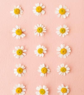 background, pink background and flowers