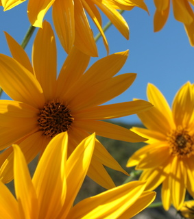 yellow, gringe and beautiful