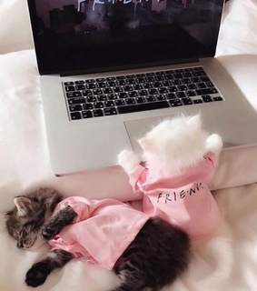 animals, netflix and friends