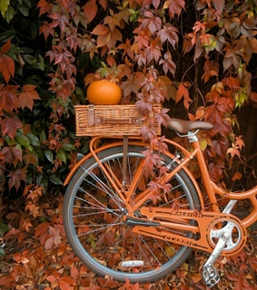fall, cycling and october