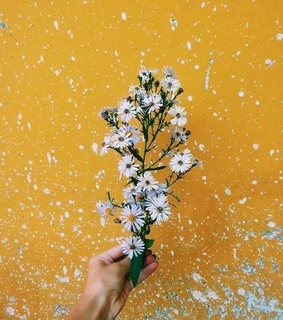 flowers, summerisover and yellow