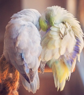 love, gbebngubb and parrots