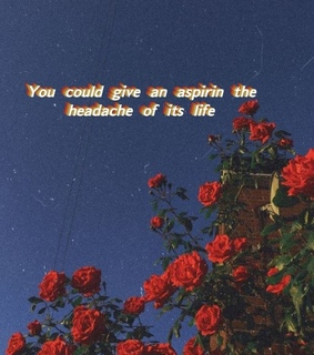 flowers, roses and quote