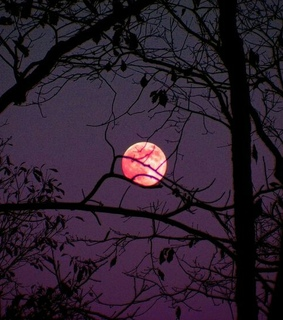 red moon, forest and night sky