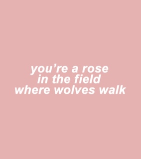 pink, field of roses and bloom
