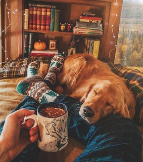 naps, dog and colourful