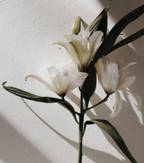 white, lilly and flowers