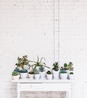 life, cacti and decoration