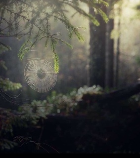 dew, woods and spider web