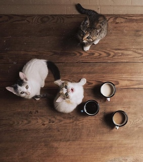 coffee, cats and cutie