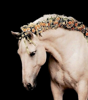 horse, mane and flowers