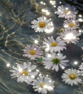 daisy, water and aesthetic