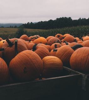 trees, haloween and pumpkin fields