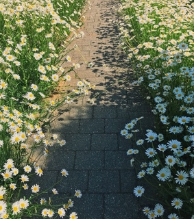 wild flowers, daffodil and pathway