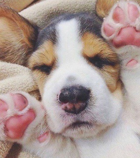 pink, puppy and paws
