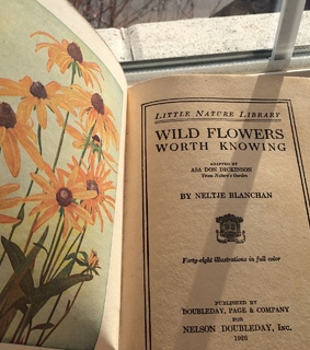 book, wild flowers and vintage