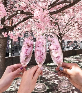 tumblr, cherry blossom and floral