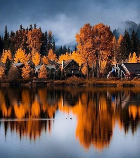 autumn, reflections and trees