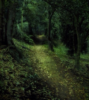 path, woods and moss