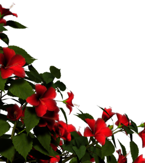 overlay, render and red flower png