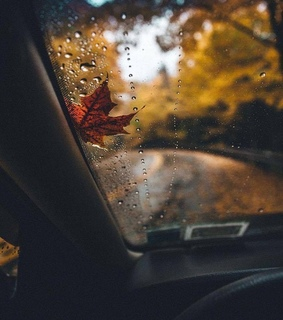 autumn, drops and drive