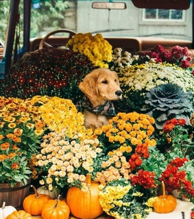 happy, pups and fall