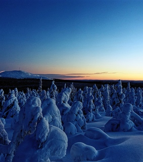 trees, europe and cold