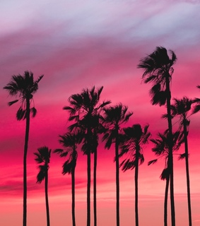 palms, sunset and pink sunset