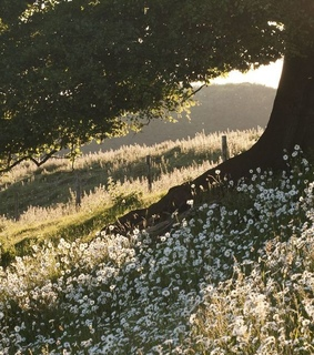 sun, green and daisies